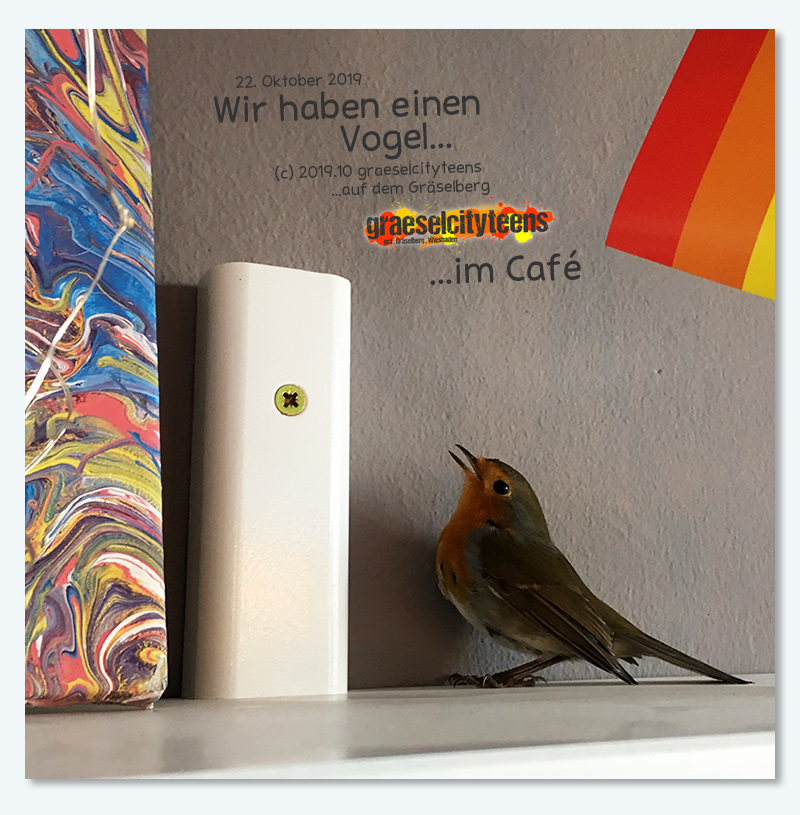 Wir haben einen Vogel... . ...im Café . 22. Oktober 2019 . graeselcityteens . Stadtteilzentrum Gräselberg . Wiesbaden